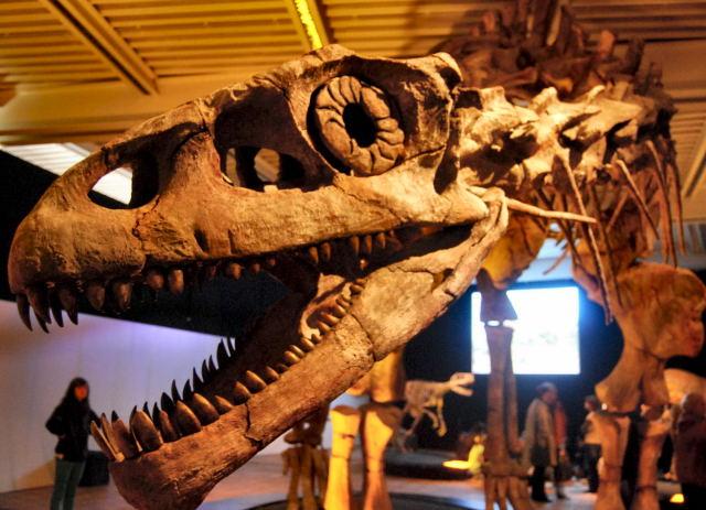 Dinoschädel